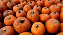 The best pumpkin and squash varieties to buy now, from 'Montana Jack' to 'Crown Prince'