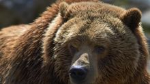 Hiker survives mother grizzly attack by playing dead in Kananaskis