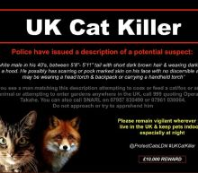On the trail of London's serial cat killer