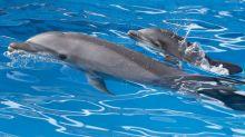 Witzig: Delfin steht auf bärtige Männer