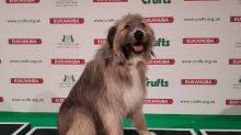 El perro más feliz del mundo más feliz al perder competencia