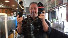 22-pound lobster freed after 20 years at New York seafood restaurant