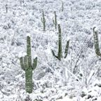It Snowed Twice in Las Vegas This Week — and More Is Coming for Arizona