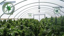 4 Reasons Why Canopy Growth Could Bounce Back in 2020