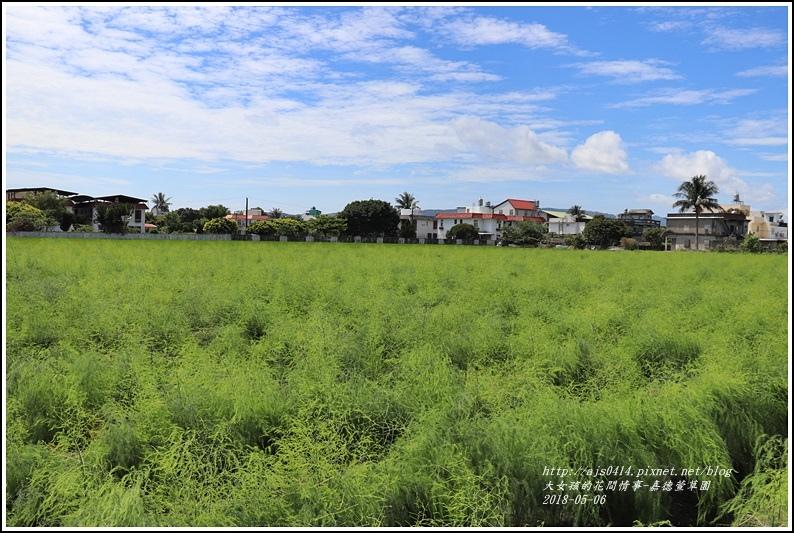 嘉德萱草園-2018-05-40.jpg