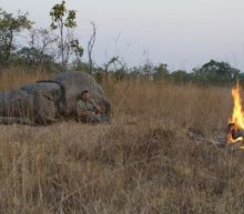 Big Game Hunter Dies After Being Crushed To Death By Elephant