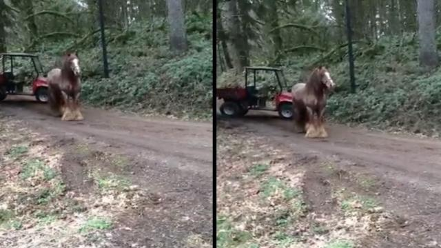 Fergus The Horse Behaves Very Badly When He Gets Loose On The Farm