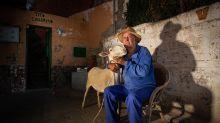 El drama del tío Guillermo, el jubilado que lucha para que no le maten a sus ovejas