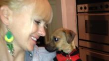 Anna Faris Faces Hefty Fine After Dog Found on the Street