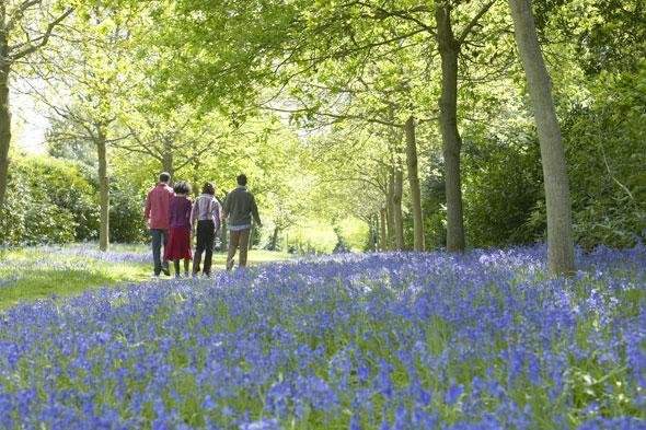 """<p> """"Over half of the world's population of bluebells can be found in the UK and the delightful carpets of blue that cover our woodlands throughout late April and May are one of our greatest spring treasures,"""" says naturalist Matthew Oates from the National Trust.</p> <p class=""""p1""""> <strong>Top bluebell viewing spot:</strong> Blickling Estate, Norfolk.Visit in April through to May and follow the winding paths through the great wood and pass through swathes of dainty English bluebells.</p> <p class=""""p1""""> <strong>Other bluebell hotspots:</strong>Hardcastle Crags, West Yorkshire;Lanhydrock, Cornwall;The Vyne, Hampshire.</p> <p class=""""p1""""> </p>"""
