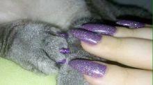 Donos de gatos estão pintando as unhas dos felinos e veterinários desaprovam