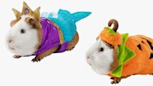 PetSmart Is Selling Halloween Costumes for Guinea Pigs, So Every Tiny Creature Can Celebrate