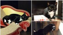 日本「黑貓」熱潮又嚟 超可愛生活照Twitter熱傳