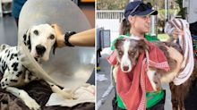 Severely neglected animals rescued from Queensland shelter