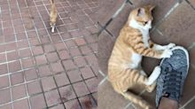 陌生貓抱腳寵幸暗爽在心 下秒牠神速彈飛男傻眼:有這麼臭?