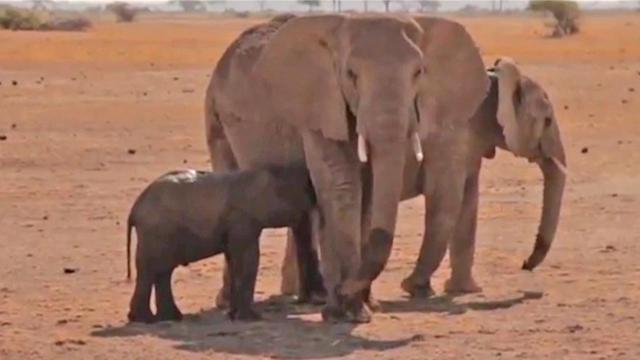 Elephant calf rescued from 5-foot Kenyan well