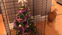 Geniales ideas si tienes una mascota 'destructora de árboles de Navidad'