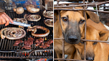 Inside the 'heartbreaking' dog meat farm where up to 5000 animals were slaughtered