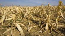 World's food supply 'under threat' from increasing loss of biodiversity, warns UN report
