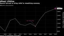 Colheita de trigo é raio de esperança para economia argentina