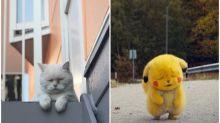 【撞樣】頹爆「比卡超」似足喵星人 日本網民狂玩Twitter熱傳