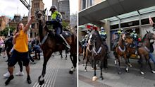 'Intimidation factor': Why police horses are needed at protests