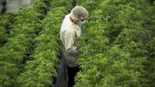 Canopy Growth shares get lift after Constellation executive named new CEO