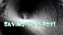 Saving A Bird Stuck In A Stove Pipe