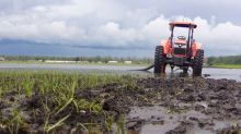 Heavy rain costly for Ontario farmers