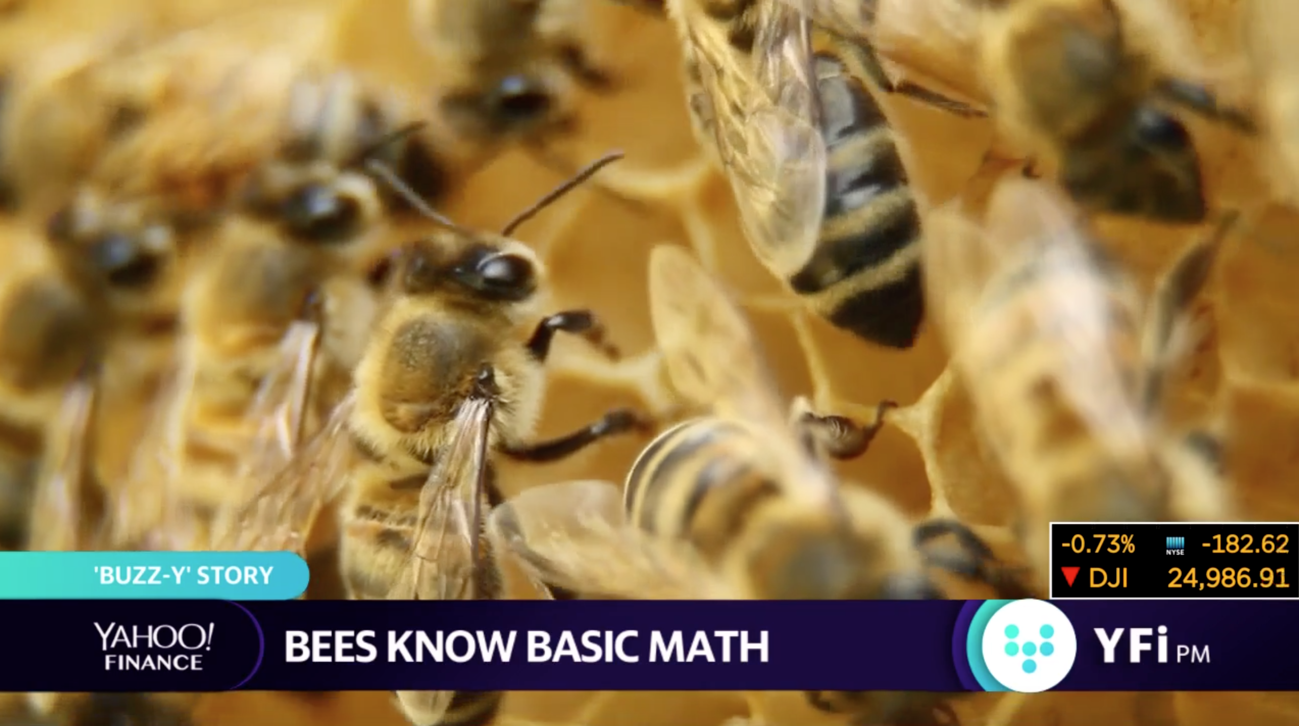 Latest buzz: bees know math