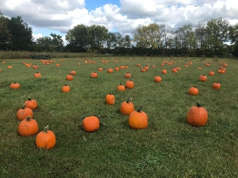 Here's a list of some of our favorite pumpkin patches in the Hudson Valley.