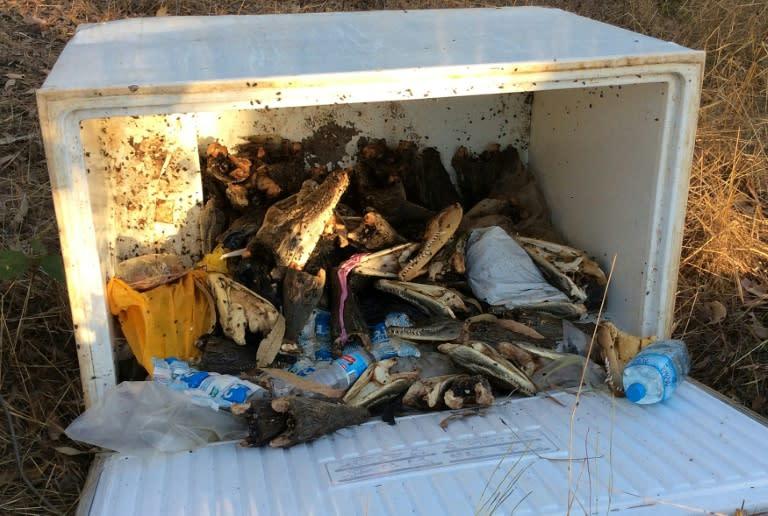Dozens of crocodile heads dumped in Australian town