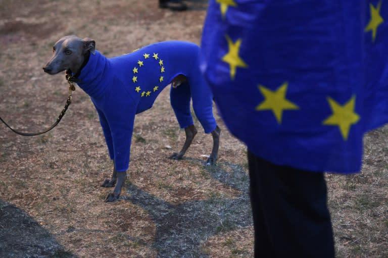 Pro-EU protesters demanding a new Brexit referendum rallied near parliament (AFP Photo/Oli SCARFF )