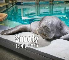 Snooty, the world's oldest manatee, dies in shocking accident
