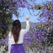 美拍紫色花瀑秘境 錫葉藤花廊超浪漫