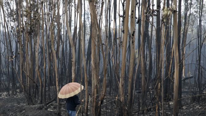 Lo que hay detrás de los incendios de Galicia: una nefasta planificación forestal