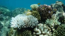 Great Barrier Reef could face 'most extensive coral bleaching ever', scientists say