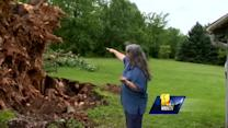 Massive tree on national registry uproots during storms