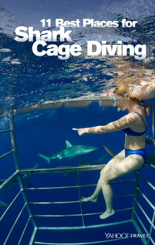 11 best places for shark cage diving