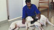 Homem economiza dinheiro por dez anos e compra ambulância para salvar animais abandonados