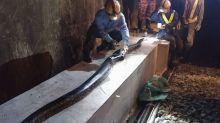 Shocking photos of huge python cut in half by train