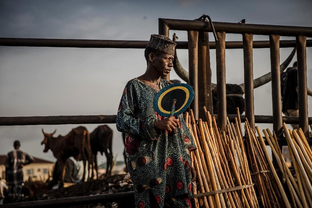 Hawker: A Fulani man selling herdsmen's sticks waits for costumers at the Agege cattle market (AFP Photo/Luis TATO)