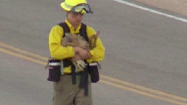 Baby Deer Rescued from Colorado Wildfire