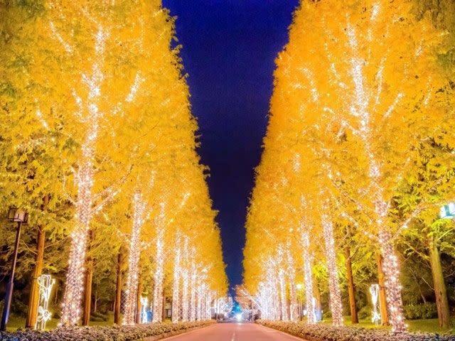 京都2018年燈飾活動