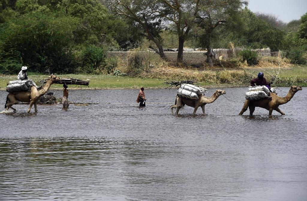 People ride camels as they cross a branch of Lake Chad on April 6, 2015 in N'Gouboua, which was attacked by Islamist group Boko Haram (AFP Photo/Philippe Desmazes)