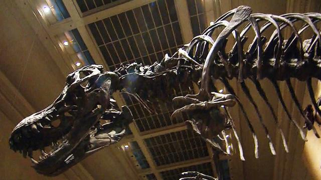 Smithsonian receives a nearly complete T-Rex skeleton