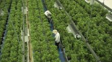 Supreme Cannabis shareholders vote to approve $435M deal with Canopy Growth