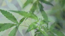 Doctors flag marijuana concerns on eve of legalization
