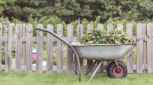 The weeds you need to remove from your garden right now
