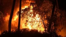 """Feu de forêt à Anglet : l'incendie est """"sous contrôle"""", environ 100 hectares de forêt brûlés"""